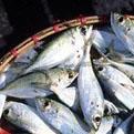 la Salamandre - Baillestavy Frankrijk :Op Maat|vissen
